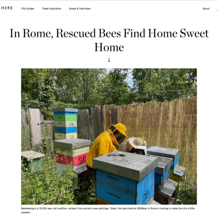 here-in-rome-rescued-bees-find-home